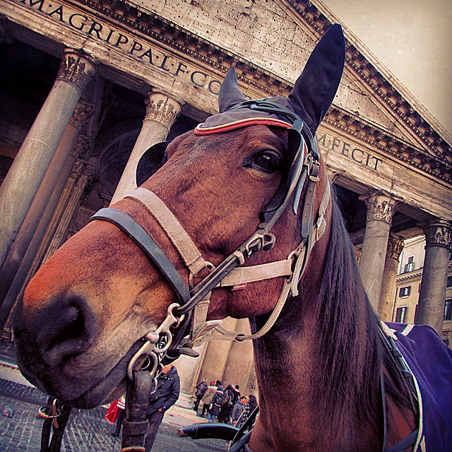 Found this poser outside the Pantheon in Rome! #europeanencounter #horse…