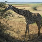 Lake Manyara – in search of Pumbaa