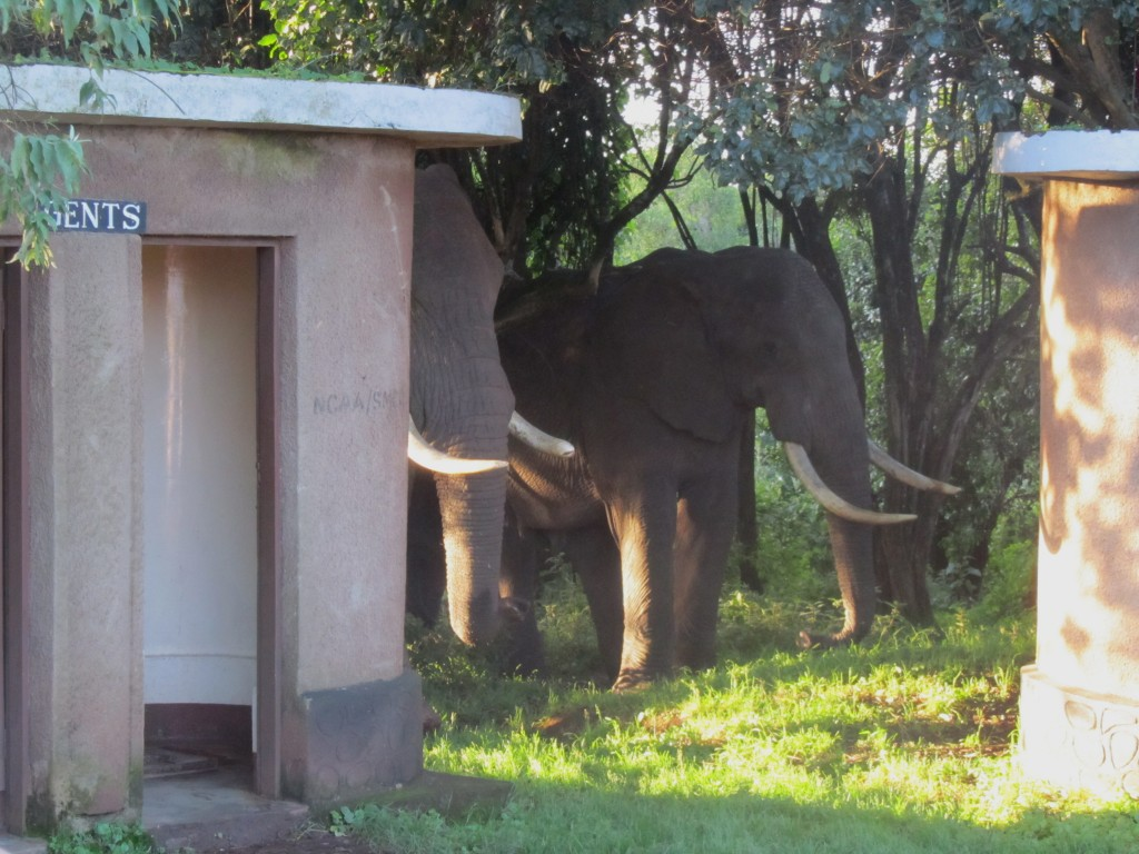 Safari in Ngorongoro Crater - elephant toilets
