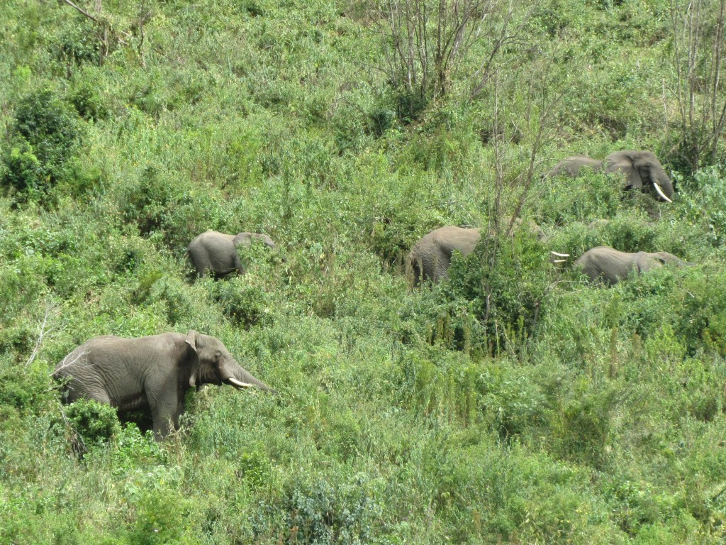 Safari in Ngorongoro Crater - elephants on the hill