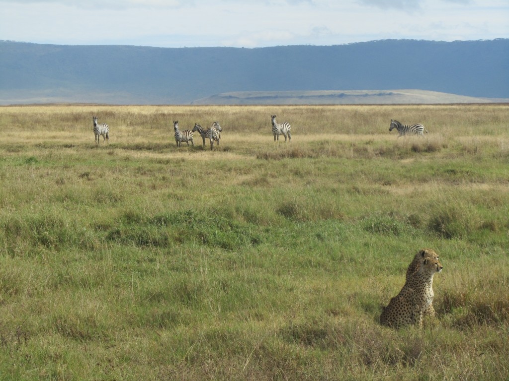 Safari in Ngorongoro Crater - theyre behind you