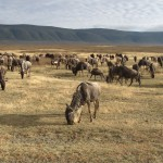 Ngorongoro Crater – home of the breakdancing zebra