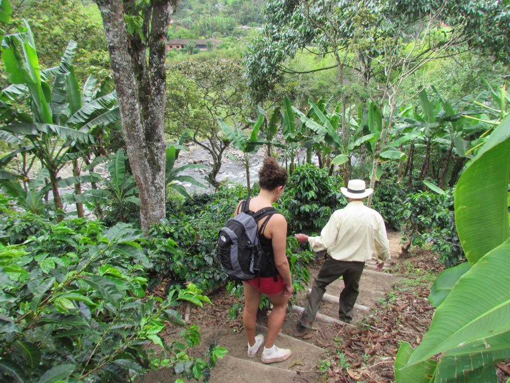 Hiking in the Cocora Valley - coffee tour