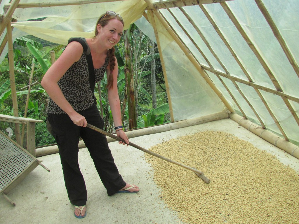 Salento Coffee Making Tour - raking