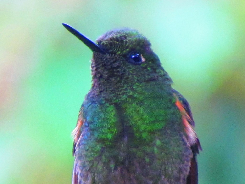 Hiking in the Cocora Valley - humming bird