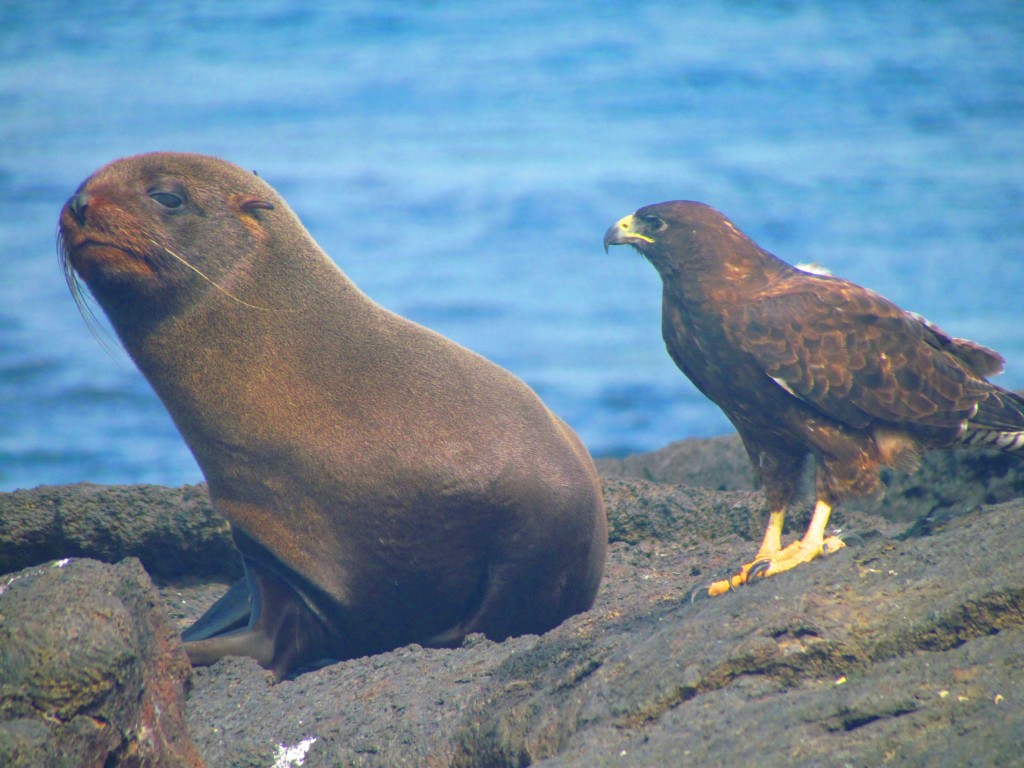 Galapagos cruise - amazing wildlife