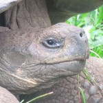 A Visit to the Galapagos Tortoise Conservation Centre