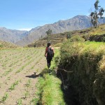 Colca Canyon: lost in a maze of maize