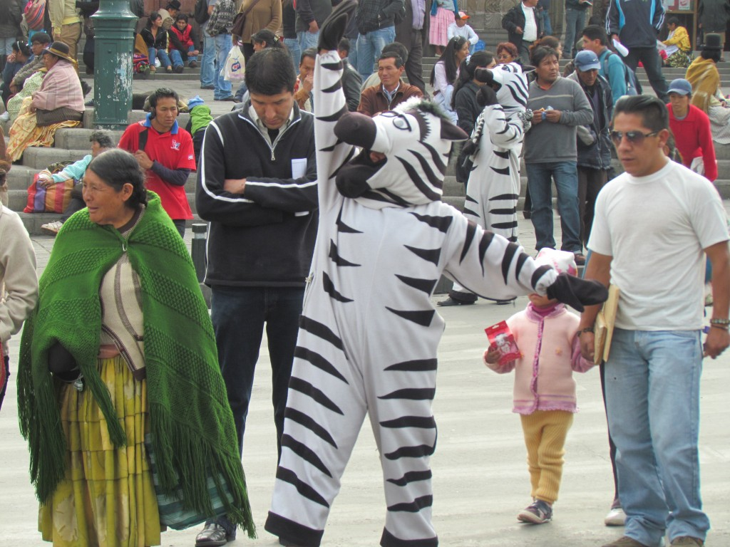 Loki hostel - zebra crossing
