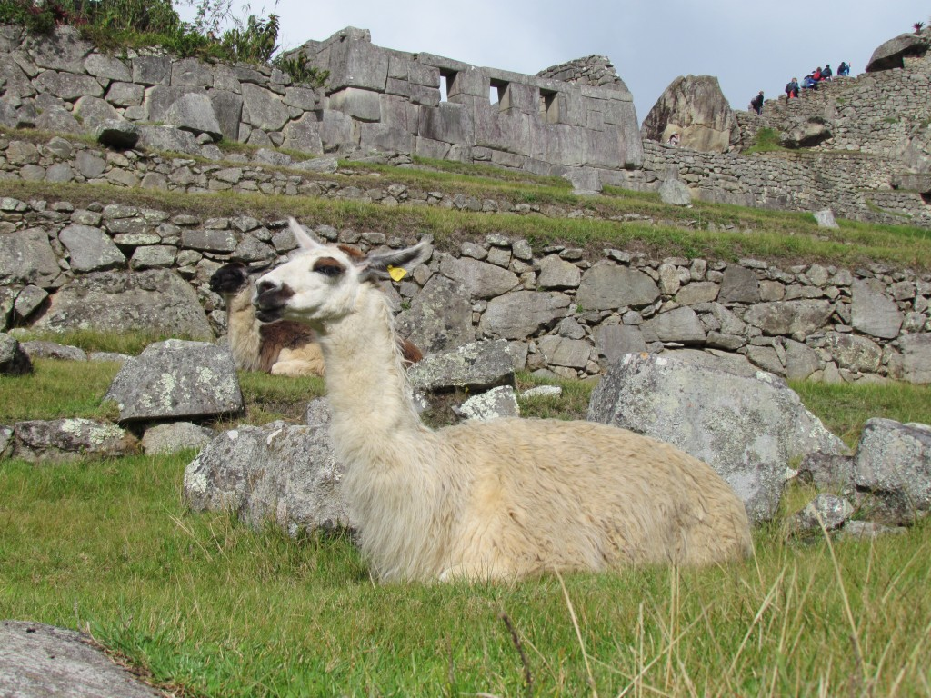 A day in Machu Picchu - speaking llama?