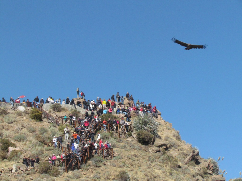 Peru in pictures - Colca Canyon