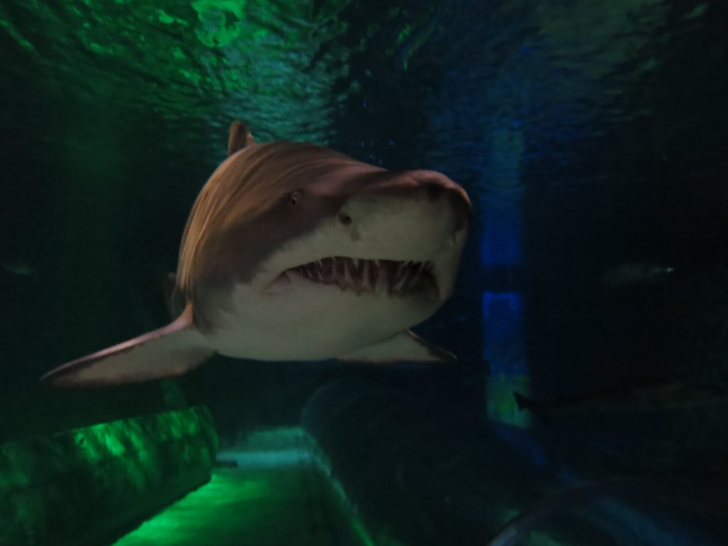 Diving with sharks at Kelly Tarlton's in Auckland - shark attack