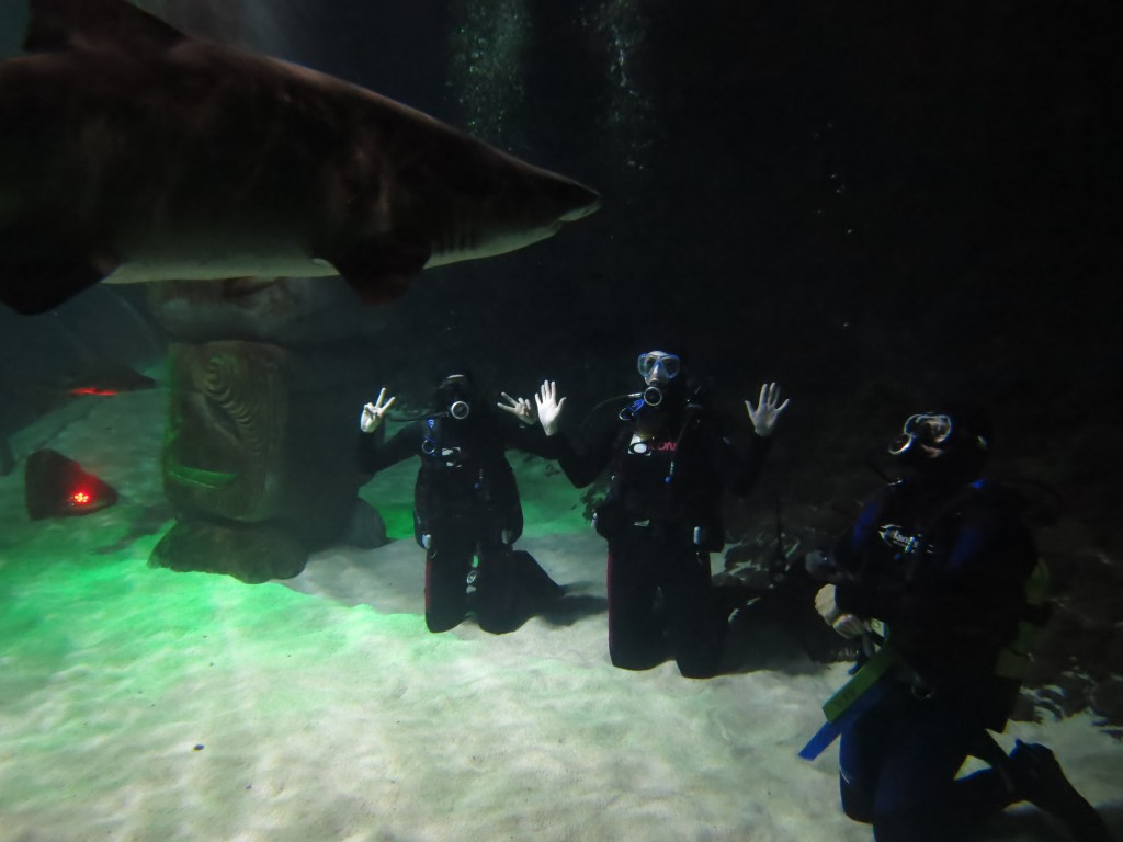 Diving with sharks at Kelly Tarlton's in Auckland - Help!