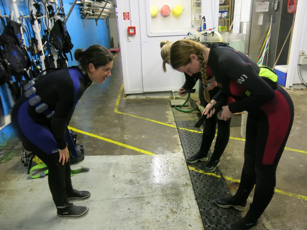 Diving with sharks at Kelly Tarlton's in Auckland - attaching weight belts