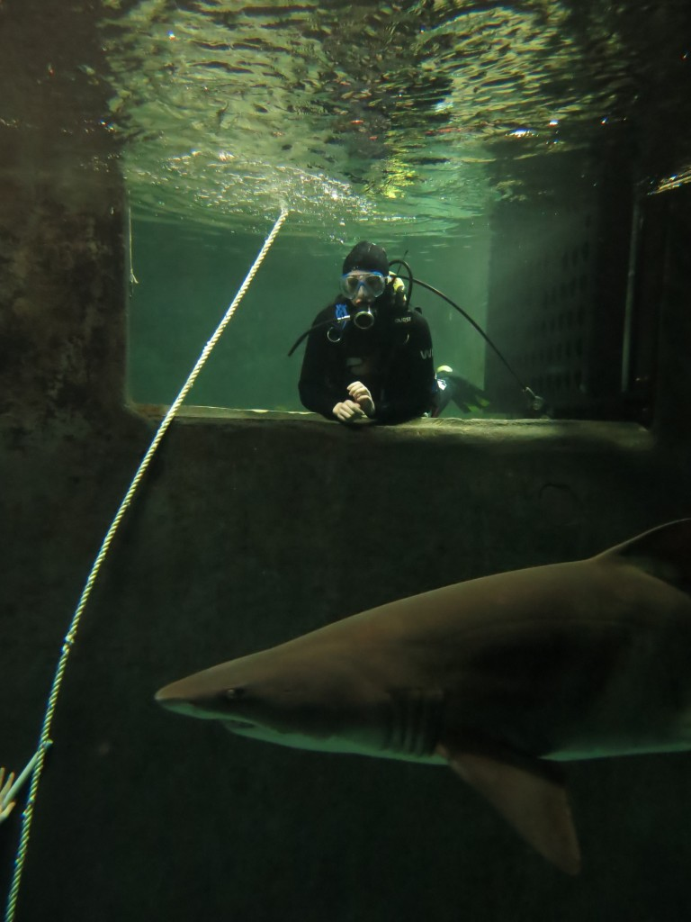 Diving with sharks at Kelly Tarlton's in Auckland - waiting to descend