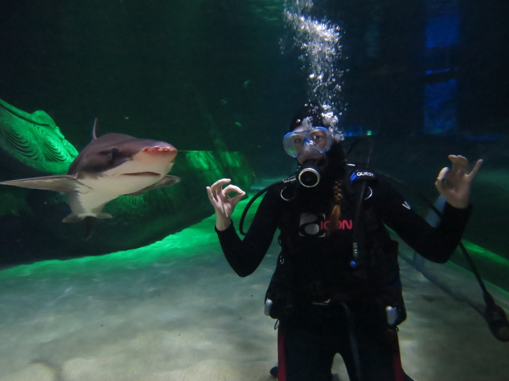 Diving with sharks at Kelly Tarlton's in Auckland - it's behind you!