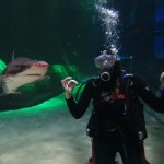 Diving with Sharks at Kelly Tarlton's in Auckland