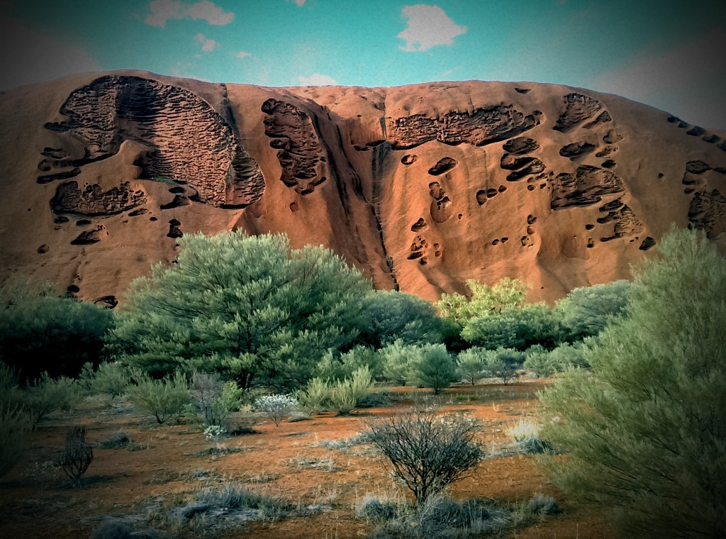 Ayers Rock Facts - flora