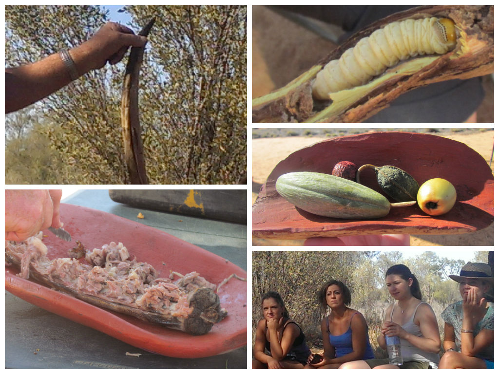 Aboriginal Bush Tucker - witchetty grub