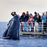 Whale Watching: One of Australia's Top Tourist Attractions