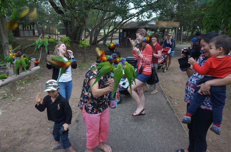 Lone Pine Koala Sanctuary - lorikeet feeding mayhem