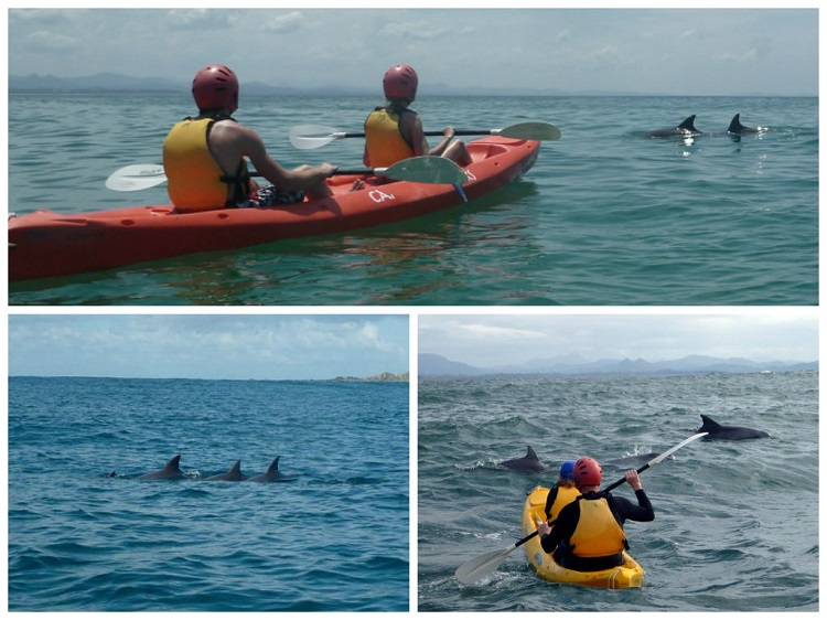Sea Kayaking in Byron Bay - Dolphins