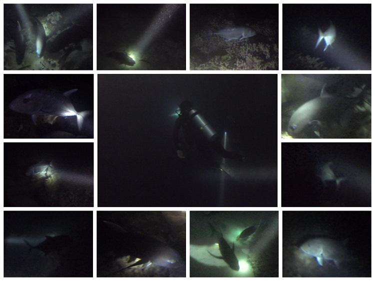 Night Diving on the Great Barrier Reef - Marine Life
