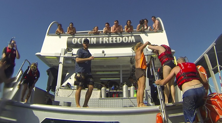 Great Barrier Reef Cruise with Ocean Freedom - Our Ride