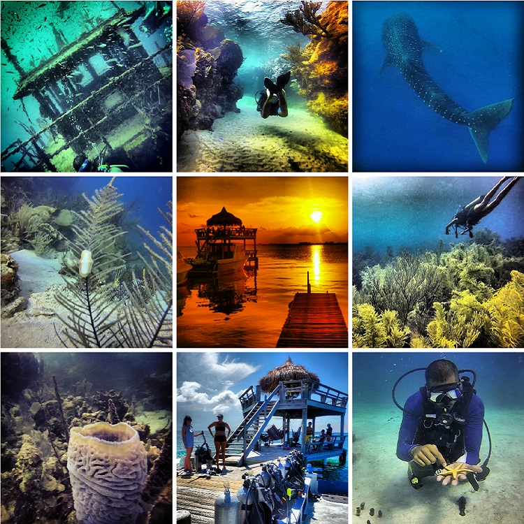 Best Dive Sites in Central America and Mexico - Utila
