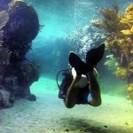 Best Dive Sites in Central America and Mexico
