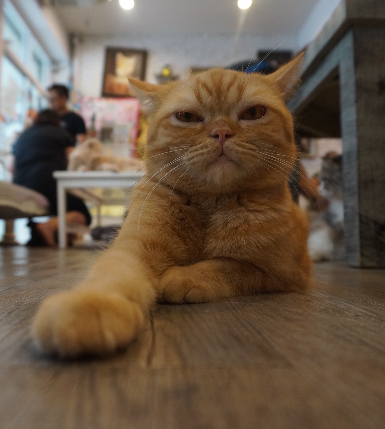 Bangkok Cat Cafe - Caturday Cafe