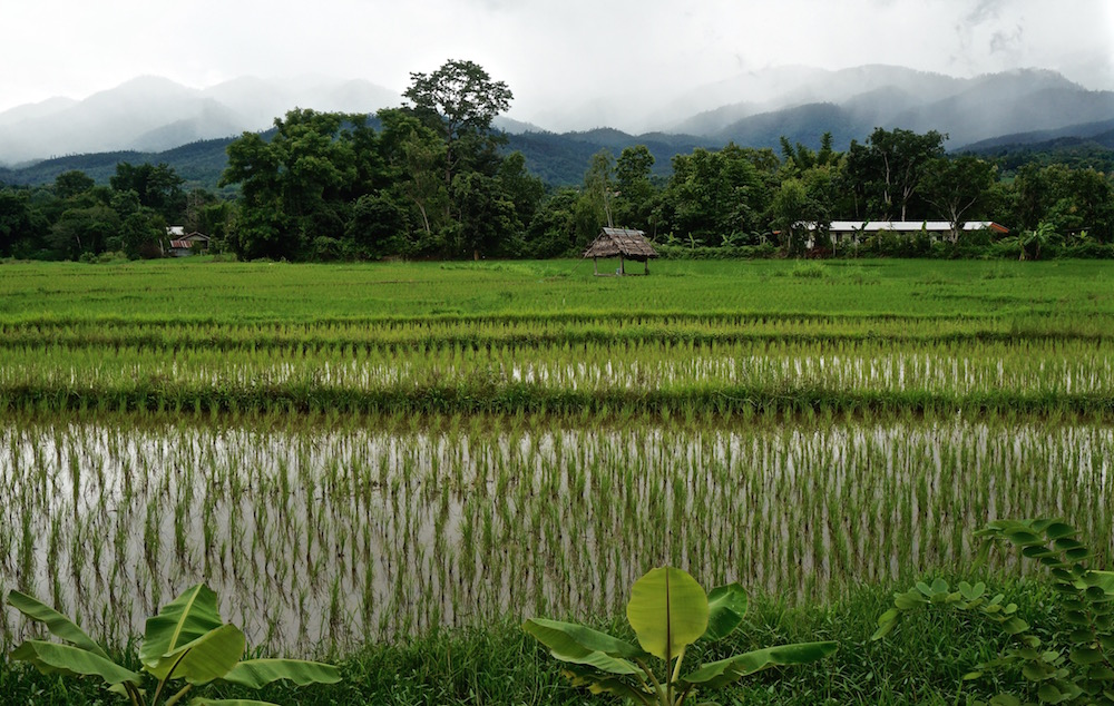 Visit Pai - Rice Paddies Near Lazy Hostel