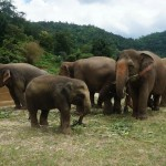 Is Elephant Riding in Chiang Mai Ethical?