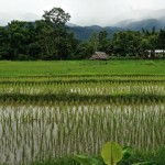 Where to Stay in Pai, and Tips on Exploring the Area