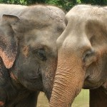 A Single Day Visit to the Chiang Mai Elephant Nature Park