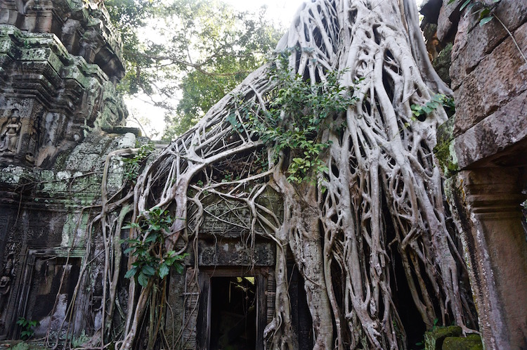 Tips on Visiting Angkor Wat - Ta Prohm