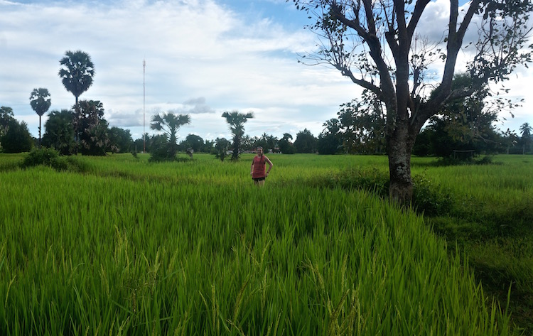 Been There Don Det: A Guide to the 4000 Islands in Laos - Rice Paddy