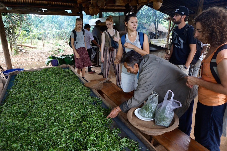 Bolaven Plateau - Tea and Coffee Plantations of the cpc