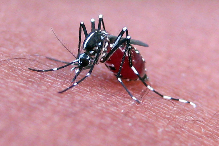 Why Mosquitoes Are a Traveller's Worst Nightmare - Mosquito