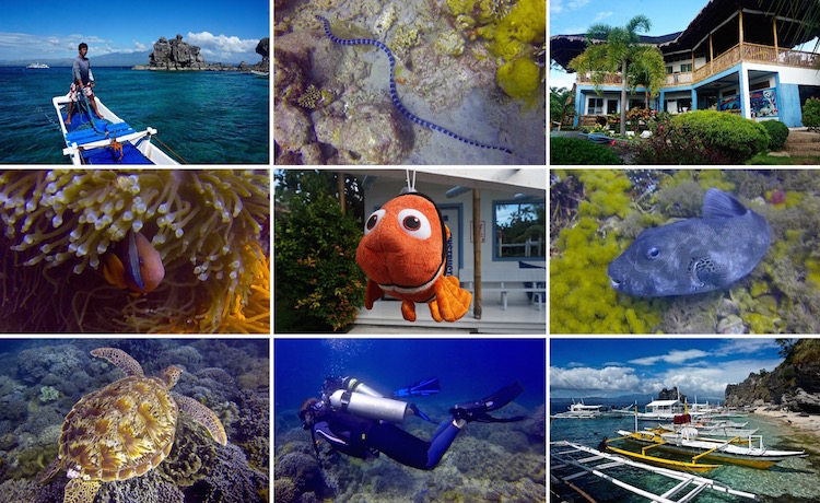 Dive Sites in the Philippines - Scuba Diving in Apo Island