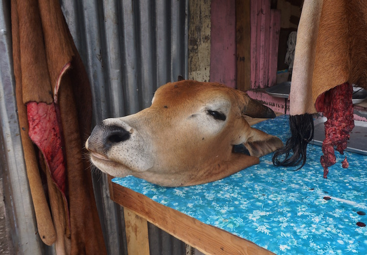 Backpacking in North Luzon - Cow's Head on a Stall