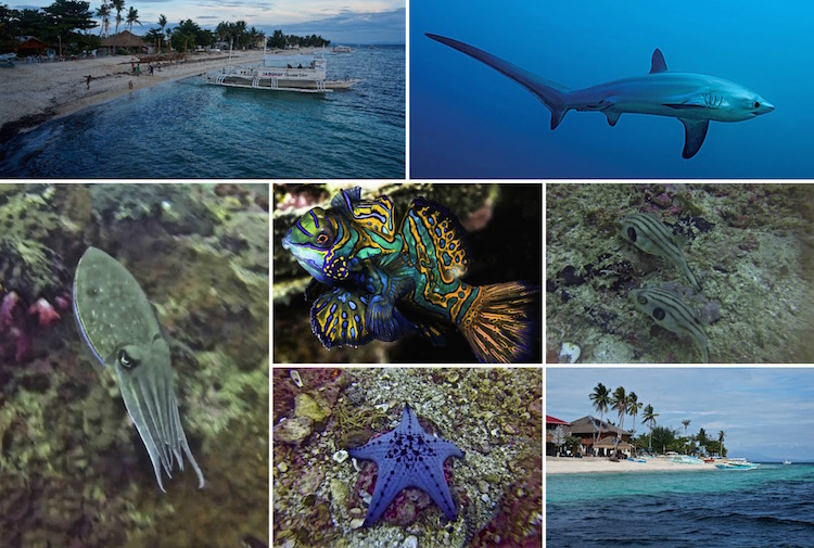 Dive Sites in the Philippines - Scuba Diving in Malapascua