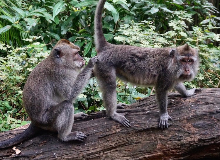 Things to do in Bali - Ubud Sacred Monkey Forest