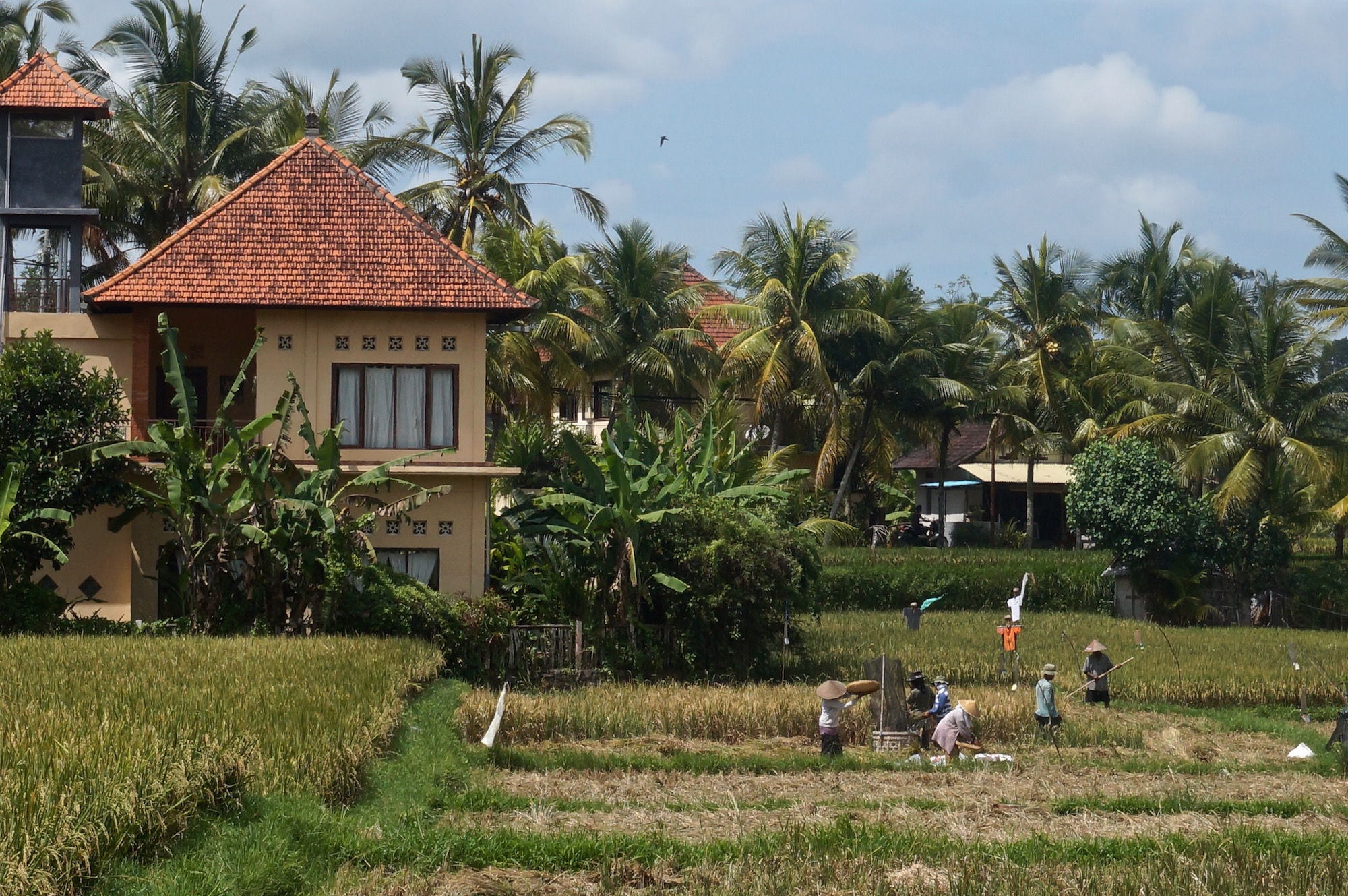 Things to do in Bali - Rice Fields - Ubud