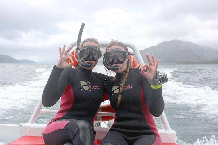 Swimming with Dolphins in the Marlborough Sounds - E-Ko Tours - Snorkelling